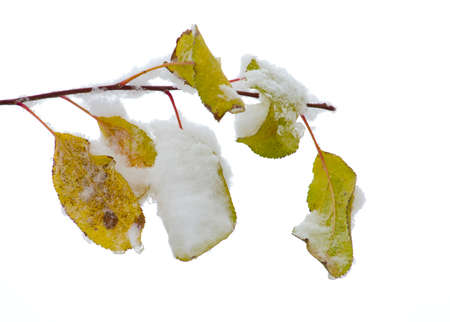 leaves of trees under the snow