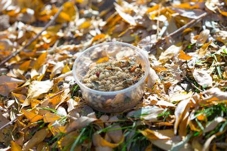 maggots, larva for fishing fish on plastic dishes