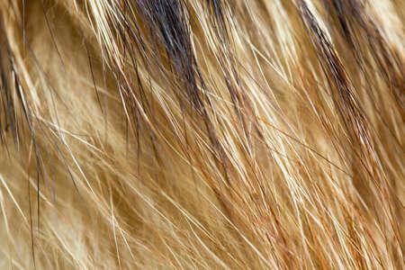 beautiful background on black, fur mink