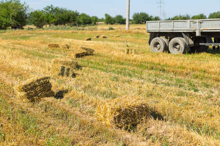 Bales of straw on a field Stock Photo