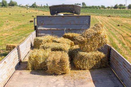 Straw on the field, people pick bales on the truck