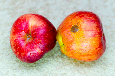 Apples with black dots and traces of worms