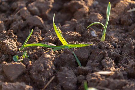 growing grass on the ground Archivio Fotografico - 114374795