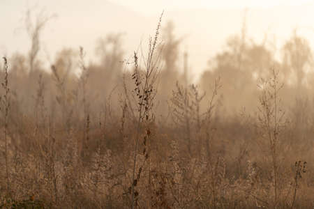 Dried meadow grass in sunlight, selective focus, abstract background