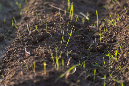 growing grass on the ground Archivio Fotografico - 114449234