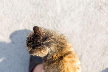 Kitten at feet on ground background
