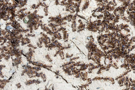 ants run to the anthill Stock Photo
