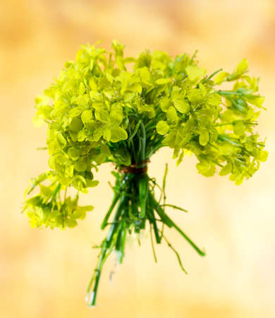 green wild flowers on brown wooden background Stok Fotoğraf