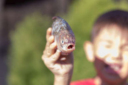 fresh crucian fish in a childrens hand