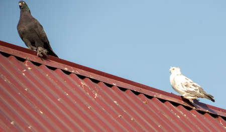 pigeons on the roof against the sky