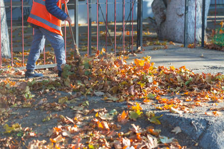 A cleaning lady cleans the dead side of the maple leaves from the sidewalk.