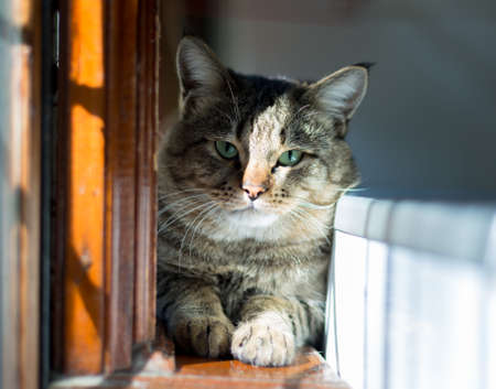 the cat is sitting on the windowsill.
