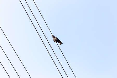 Bird sitting on a power line cable against a cloudy sky. 版權商用圖片