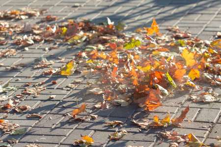 Colorful fallen leaves on a sidewalk in warm Autumn day. 版權商用圖片