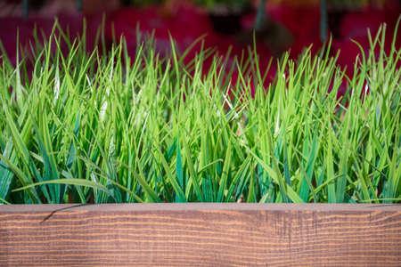 artificial grass in the flower market Reklamní fotografie