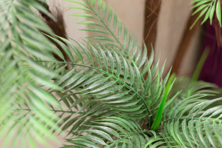 artificial ornamental plant. Exotic plants for the interior. Reklamní fotografie