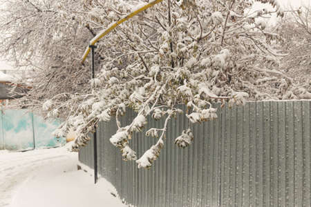 snow on trees in winter 스톡 콘텐츠