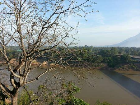 riverside tree: Riverside tree