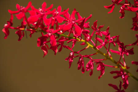 beautiful red orchid Stock Photo - 14012562
