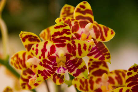 joy music orchid