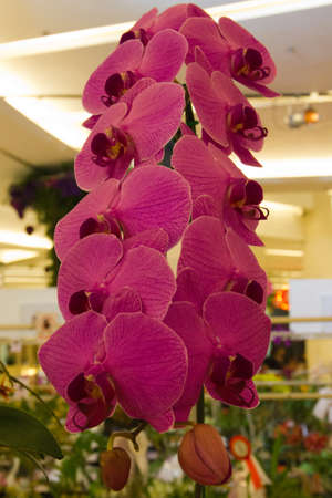 happy valentine orchid Stock Photo - 14012477