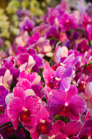orchids Stock Photo - 14012566