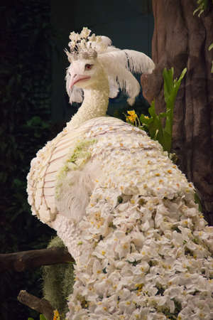 beautiful peacock made from flowers