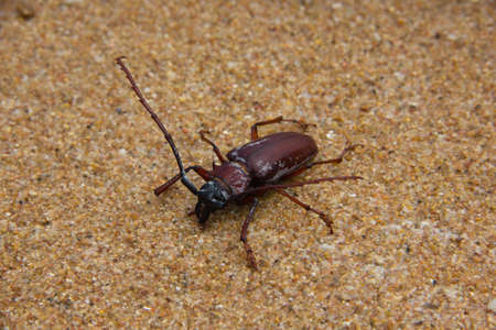 insect on the beach photo