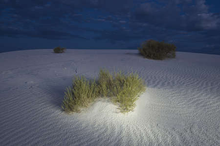 Brush growing on sand dunes at dusk, White Sand Dunes National Monument, New Mexico, USA photo