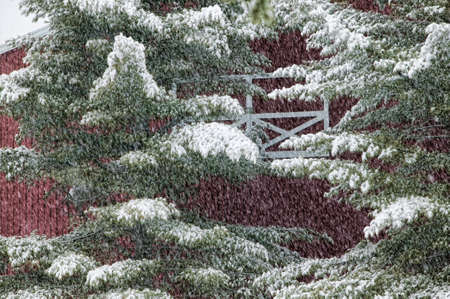 Digitally manipulated image of a snow covered pine tree in front of a red barn, Stowe Vermont, USA photo