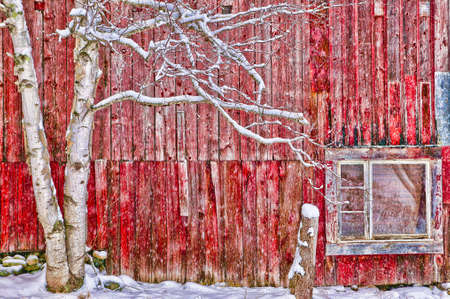 old barn: Tree in front of a red weathered barn, Stowe, Vermont, USA Stock Photo