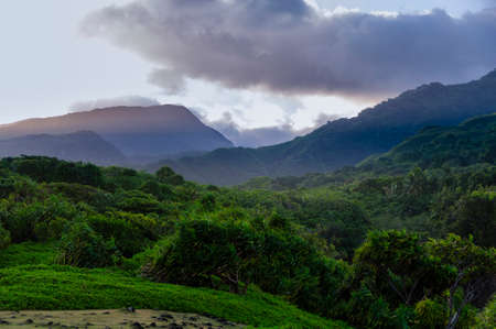 Looking up at a lush tropical valley on the Road to Hana, Maui, Hawaii, USA
