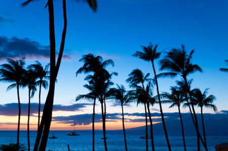 Palm trees and boats on the water in silhouette on the beach at sunset, on Maui, Hawaii, USA photo