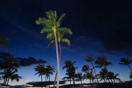 Majestic palm trees on the beach at sunset, on Maui, Hawaii, USA