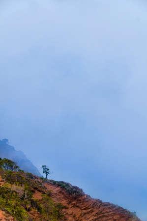 waimea canyon state park: Lone tree on the edge of a cliff overlooking Waimea Canyon State Park on the island of Kauai, Hawaii, USA Stock Photo