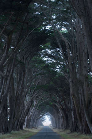 arching: Tree canopy arching over a misty blue road, California, USA Stock Photo