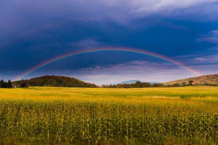 Rainbow over a golden field of corn, Stowe, Vermont, USA photo