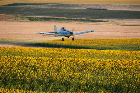 fungicide: Crop duster flying low over a field of sunflowers spraying pesticide, Montana, USA Stock Photo