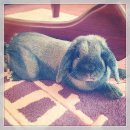 otganimalpets01: The Bunny as a pet