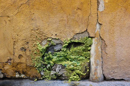 strange green insulating product in a broken yellow wall with the texture of a mutant alien appearance