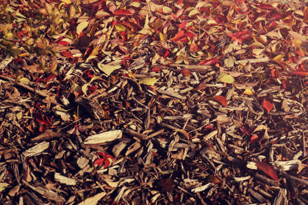Autumn ground with red and yellow leaves fallen from trees and wooden sticks - beautiful background texture