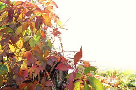 autumn plants with red, yellow and green leaves as an ornamental frame of a white blank background Reklamní fotografie