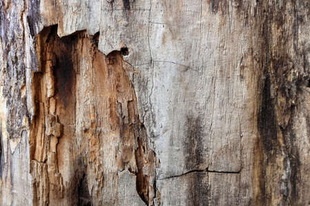 Wooden tree bark smooth texture with a hole in the center