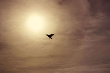a migratory bird flying high and free in the sky at sunset towards the sun on a sepia background with clouds - evocative wallpaper