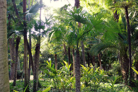Tropical forest landscape with green palm trees - warm wallpaper Stock Photo