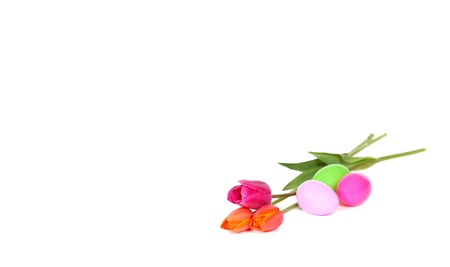 colourful tulips laying with easter eggs beside them. isolated on white Zdjęcie Seryjne