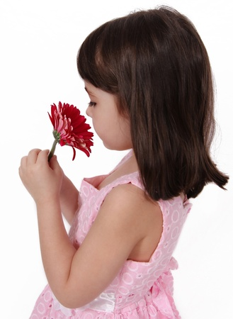 sweet little girl in dress smelling pink daisy. isolated one white photo