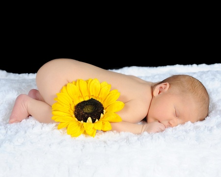 sweet newborn sleeping on white blanket with yellow sunflower. isolated on black photo
