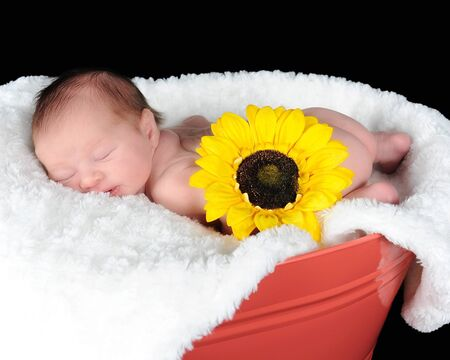 sweet newborn sleeping peacefully in a container. isolated n black photo