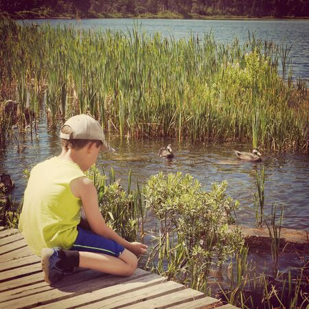 provoking: young boy feeding ducks at summertime